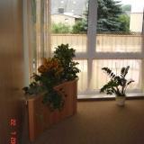 Grünpflanze im Anmeldebereich der Kassenpraxis