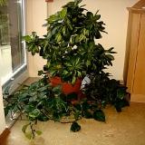 Grünpflanze im Sprechzimmer